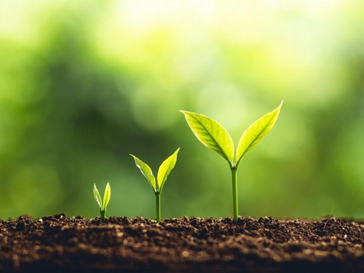 Hur ser din handlingsplan ut för att nå en lönsam tillväxt?